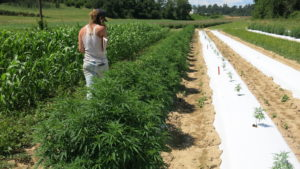 Cover photo for Come Work With Us in the NC Alternative Crops & Organics Program!